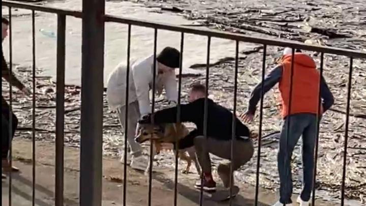 Ярославские артисты спасли упавшую в реку собаку