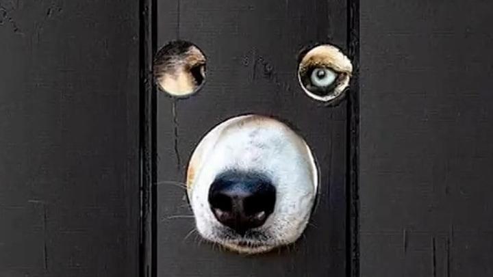 Британец просверлил дыры в заборе, чтобы его собаки наблюдали за улицей