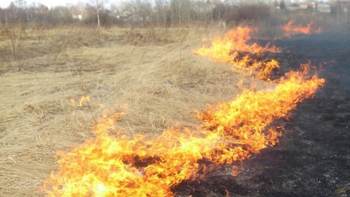 Во Владимире задержаны поджигавшие сухую траву школьники