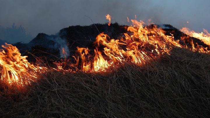 В Алтайском крае начались масштабные ландшафтные пожары
