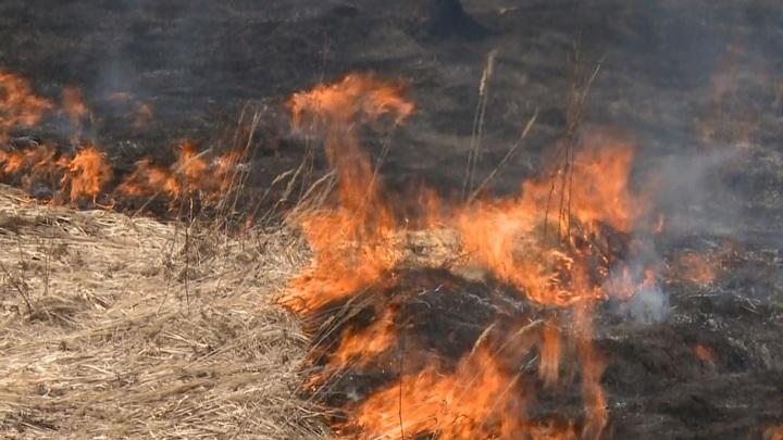 Глава Смоленской области выразил обеспокоенность масштабом палов травы
