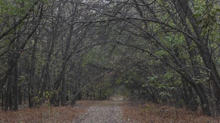 В Оренбургской области найдено тело пропавшего зимой подростка