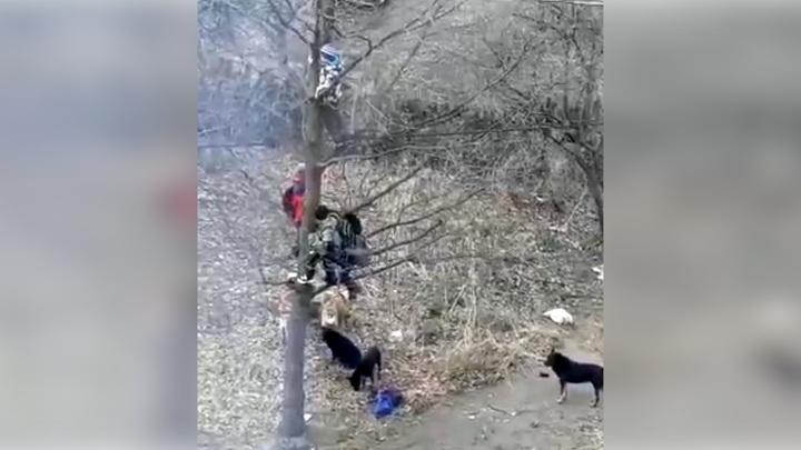 Свора бродячих псов загнала школьников на дерево в Башкирии. Видео