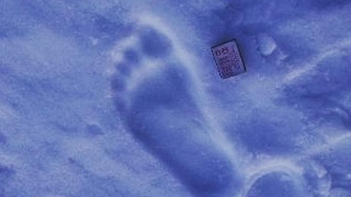 Снежный человек? Следы загадочного существа обнаружены на Ямале