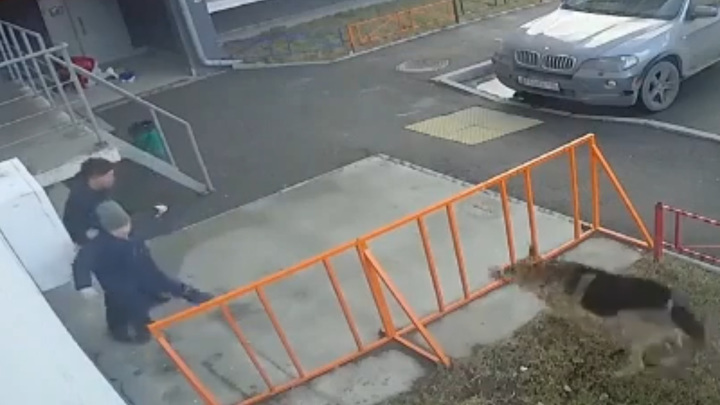 Сорвавшаяся овчарка напала на детей в Свердловской области. Видео