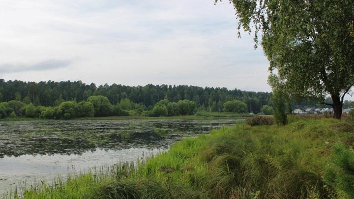 Семейную пару охотников нашли с огнестрельными ранениями в Вологодской области