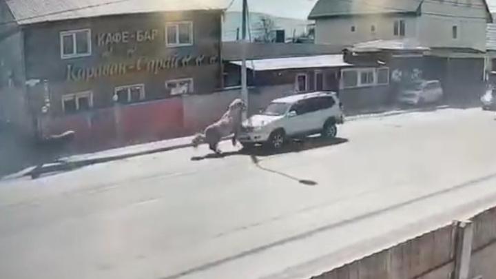 Столкновение лошади с внедорожником на Сахалине попало на видео