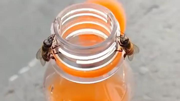 Видео: две пчелы откручивают крышку, чтобы добраться до сладкой газировки