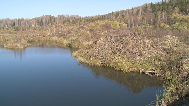 На Алтае закупают технику для лесовосстановления в труднодоступных таежных зонах