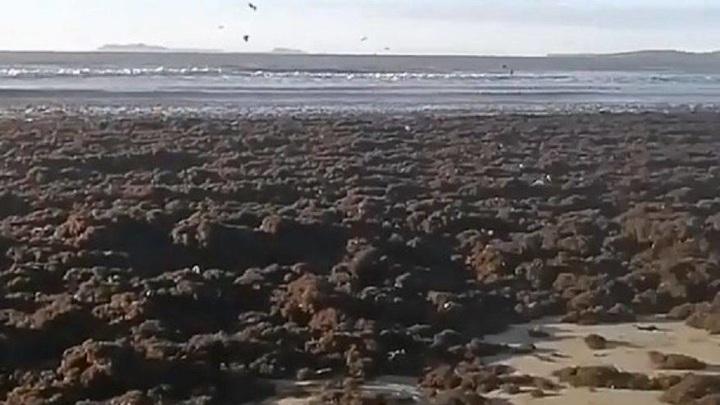 В Приморье пляжный отдых находится под угрозой от ужасного зловония