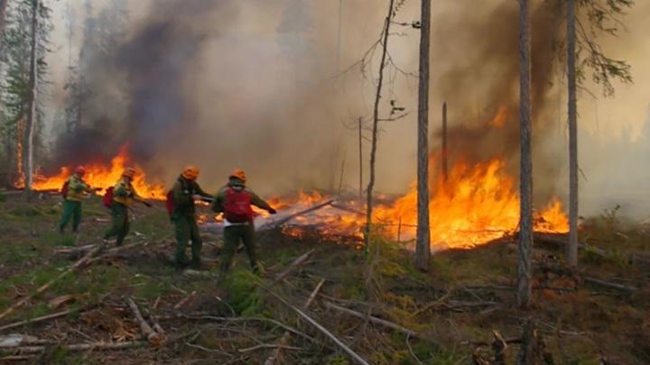 65 лесных пожаров ликвидировали в России за минувшие сутки