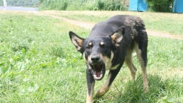 Дочь умершей от укусов собак жительницы Самары рассказала о трагедии