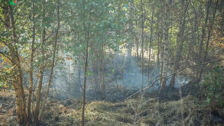 Первый крупный торфяной пожар зафиксировали под Вологдой