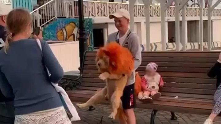 В Сочи полиция проверит скандальных фотографов, эксплуатирующих собак-львов