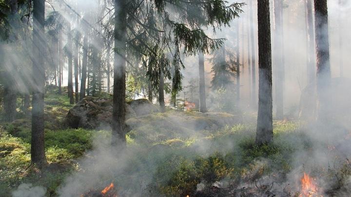 Ситуация с лесным пожаром около якутского поселка Хандыга стабилизировалась