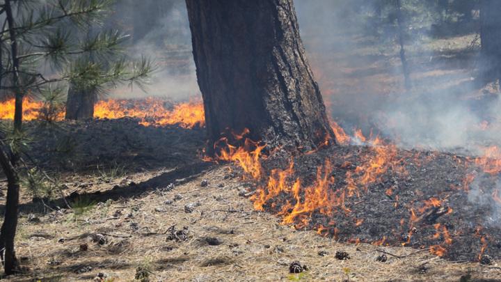 МЧС ввело 4 класс пожароопасности в нескольких районах Вологодской области