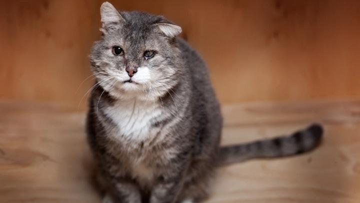 В Новосибирске ищут дом одноглазому коту Кутузову