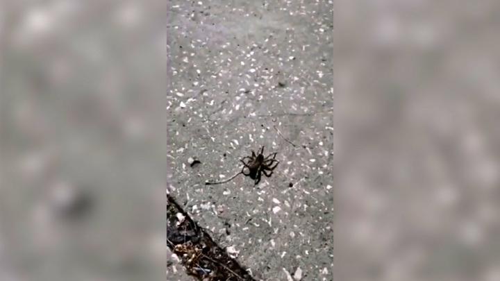 В Тольятти тарантул решил отдохнуть на турбазе и напугал туристов