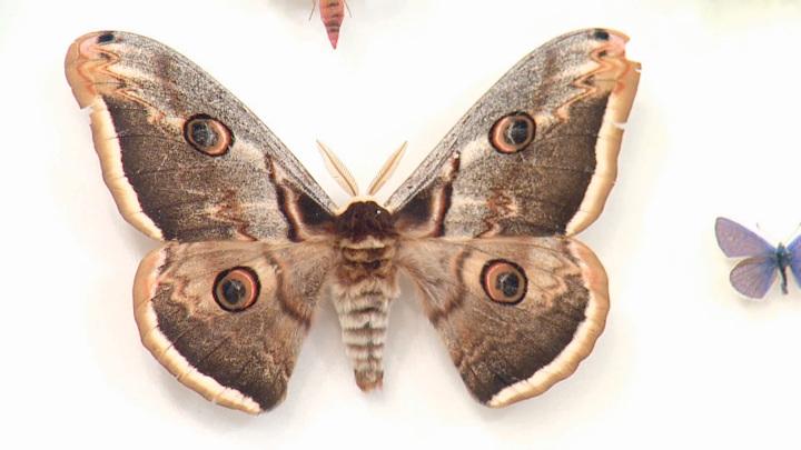 """Кадр из программы """"О самом главном"""". Мясников рассказал, чем опасно прикосновение бабочки"""