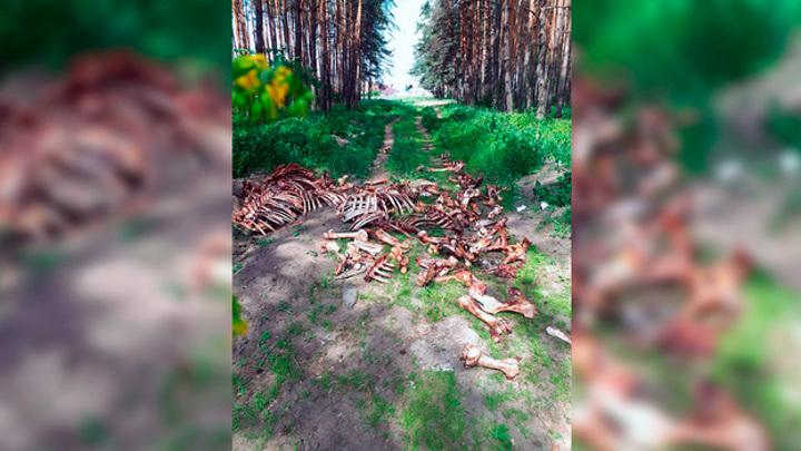 Жуткое кладбище из костей в микрорайоне Воронежа убрали спустя два дня