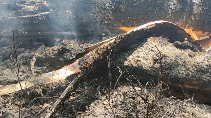 В Смоленской области пожар сжег 6 гектаров лесной подстилки