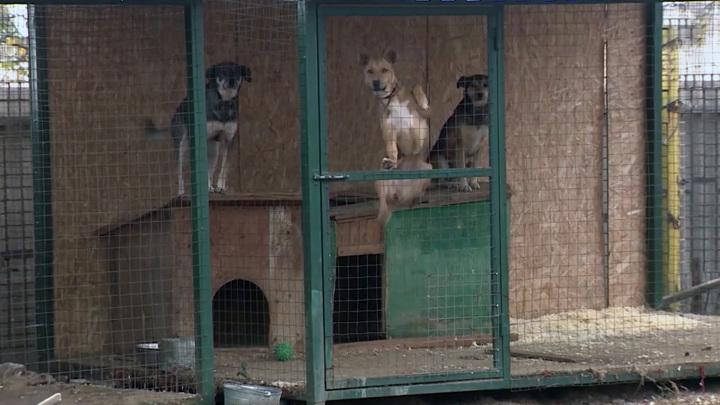 Прокуратура взяла под контроль ситуацию с бродячими собаками в поселке ГЭС