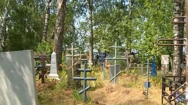 Очевидец снял на видео обедающего на кладбище медведя