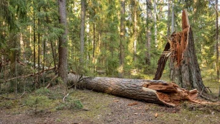 Прибило насмерть: в Башкирии на женщину упало дерево