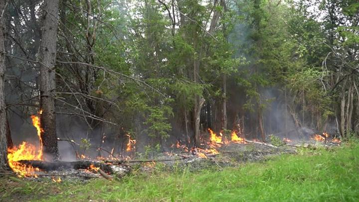 В Подмосковье ограничили нахождение в лесах из-за пожароопасности