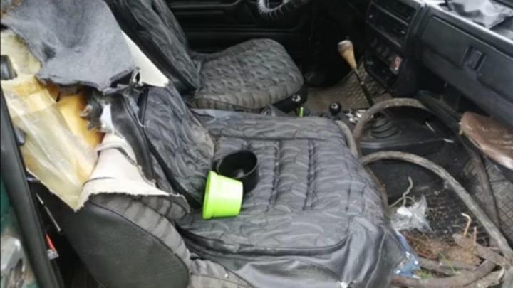 Открыл машину и съел: нападение голодного медведя