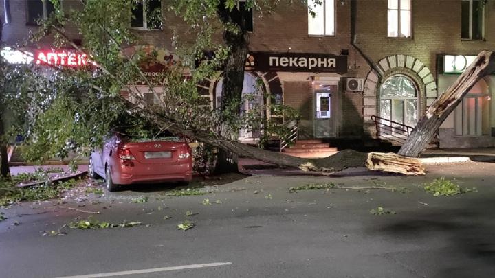 В Челябинске дерево чуть не раздавило припаркованную машину