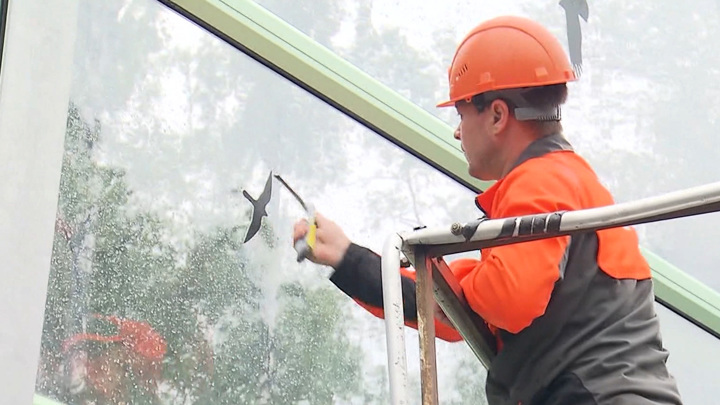 Прозрачные экраны в Новой Москве стали причиной массовой гибели птиц