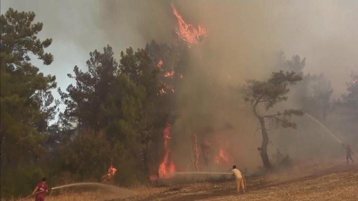 В Турции нашли ответственных за лесные пожары