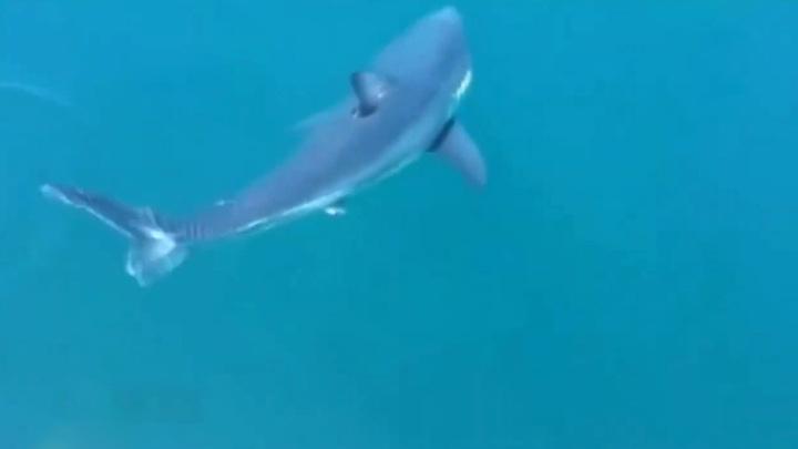 В Приморье отдыхающих предупредили о возможном появлении белых акул