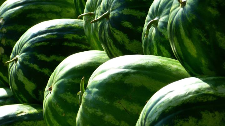 Минсельхоз прогнозирует рост урожая арбузов и дынь