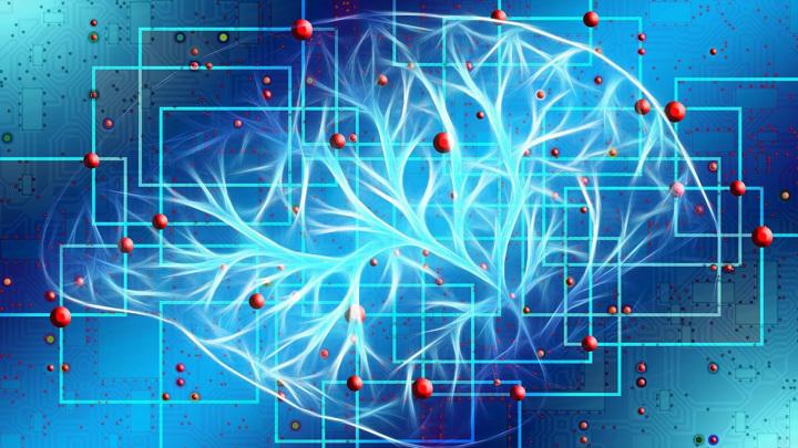 """Исследователи поместили 48 """"нейрозёрен"""" в кору головного мозга мыши и успешно записали нейронные сигналы, связанные со спонтанной активностью мозга."""
