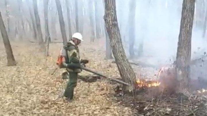 В Приморье отменяется особый противопожарный режим
