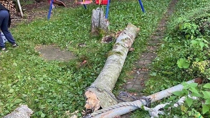 Рухнувшее дерево убило маленькую девочку на севере Подмосковья
