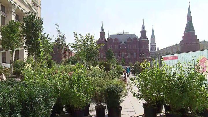 """В парках Москвы высадят порядка 50тыс. кустарников, цветов и деревьев из садов фестиваля """"Цветочный джем"""""""