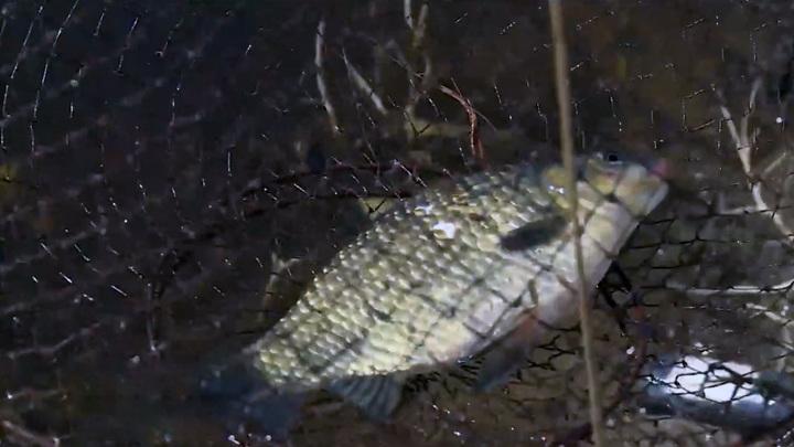 Жители Хабаровского края ловят опасную рыбу с автотрасс и на полях