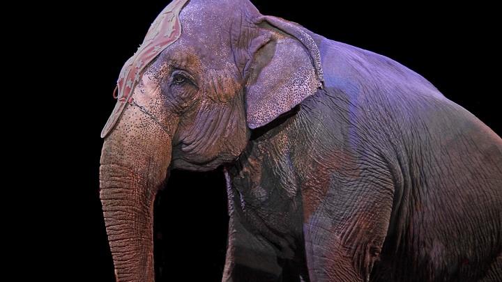 Нижегородский цирк несанкционированно ввез в Марий Эл 17 животных