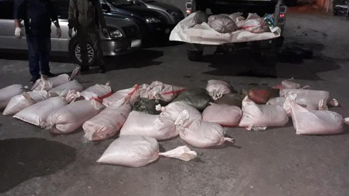 На Камчатке полиция остановила внедорожник, набитый красной икрой