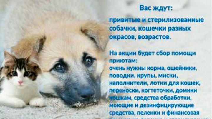 Акция по раздаче бездомных животных состоится в Переславле