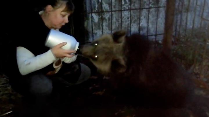 В Ленинградскую область доставили медведицу, спасенную в Карачаево-Черкесии