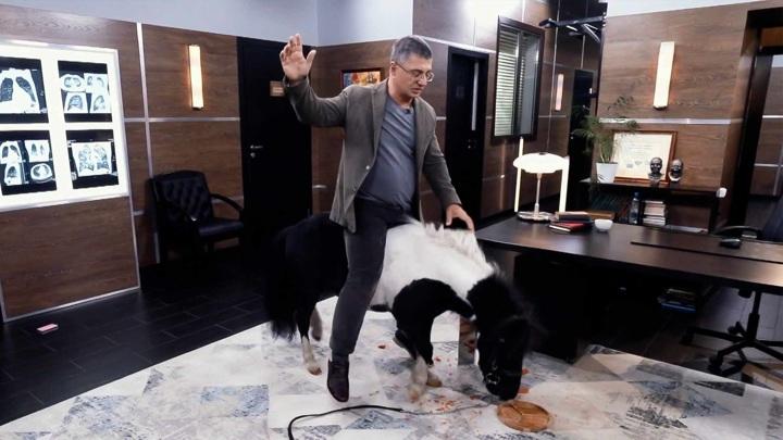 """Мясников и пони. Кадр из программы """"Доктор Мясников"""". """"Или ты ее, или она тебя"""": чему нас учат лошади"""