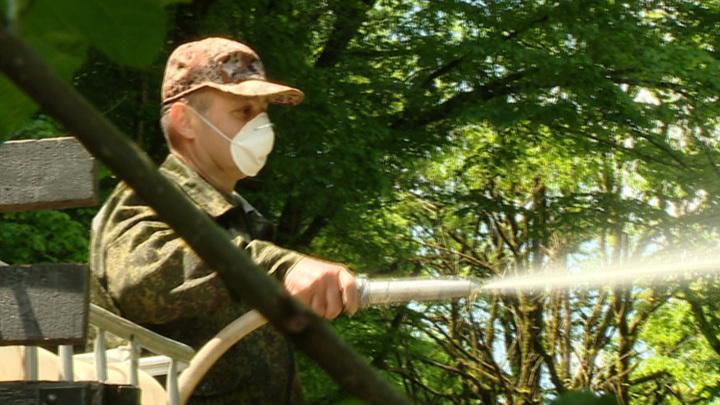 Страх на лапках: клопы терроризируют Сочи