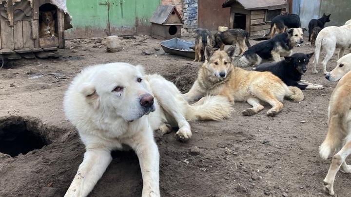 Около двух десятков собак погибли в воронежском приюте