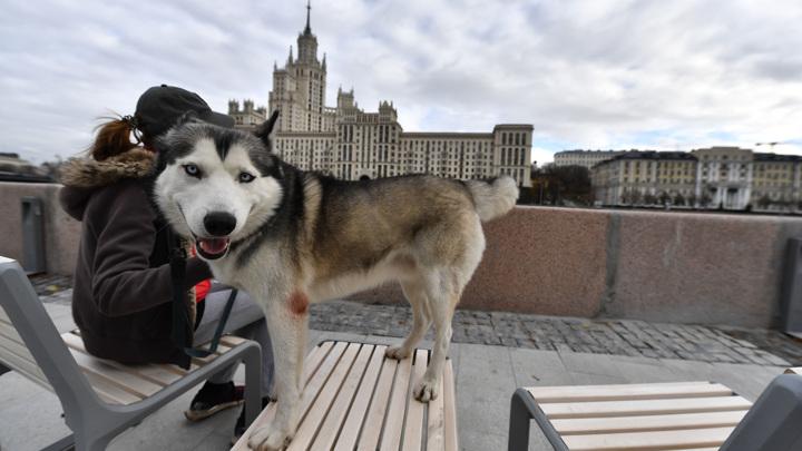 За выгул опасных собак без намордника владельцу грозит штраф в 5 000 рублей