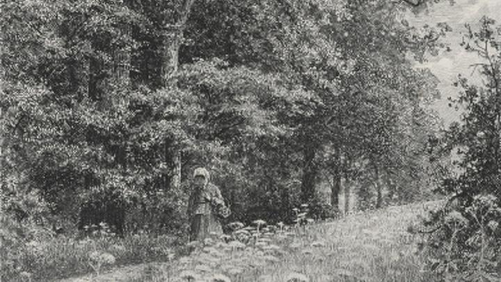 "И.Шишкин ""Женщина на опушке леса (На лесной меже)"", 1878. Фрагмент"