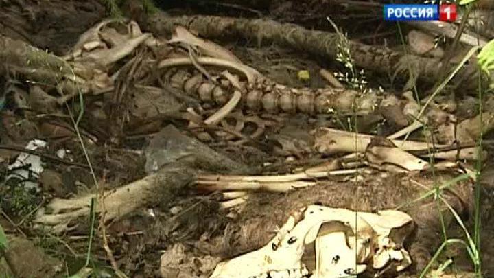 Более сотни трупов бездомных собак обнаружили в лесу под Ногинском